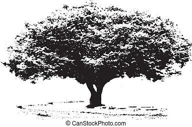 Big tree - B/W big tree