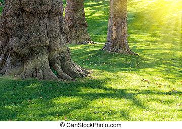 Big tree in green park