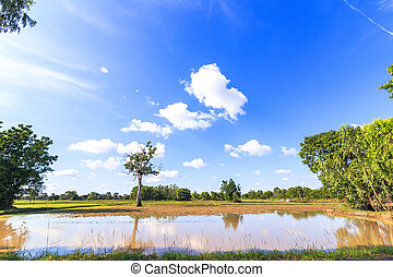 Big tree in little field near water and blue sky with cloud.