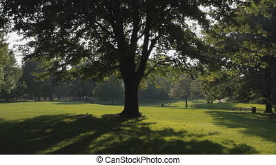 Big tree in sunny park.