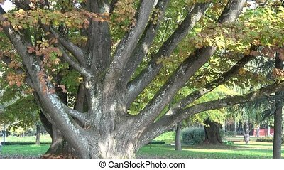 Big tree in the park in autumn