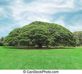 big tree in the park with blue sky