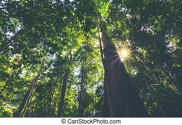 big tree in the tropical forest