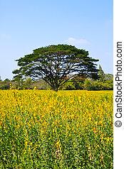 Big tree in the yellow flower farm