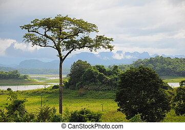 Big tree near lake