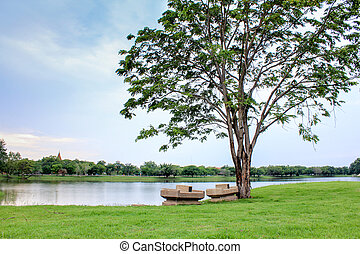 big tree on green grass in park