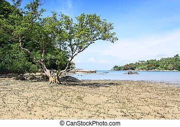 big tree on the beach at layan beach phuket thailand