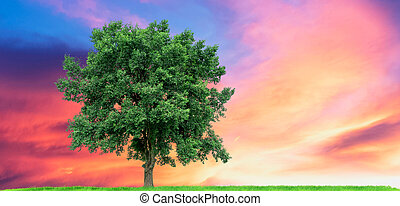 Big tree On the green meadow There is a backdrop in the blue sky and sunset, with clipping path