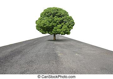 Big tree on the road.