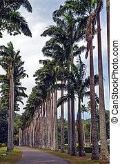 big tree palm trees eco tourism - street with big palm trees...