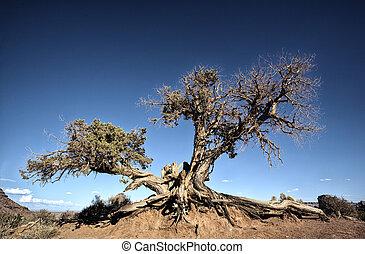 big tree root