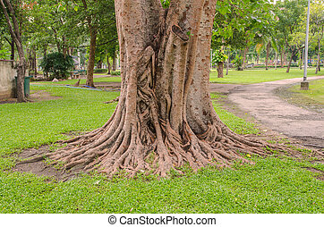 big tree root in green grass on public park