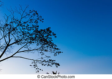 Big tree silhouette sunset on blue sky