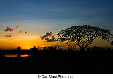 Big tree silhouette sunset