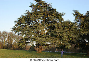 big tree small woman