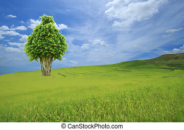 Big tree stand in paddy rice field with blue sky background