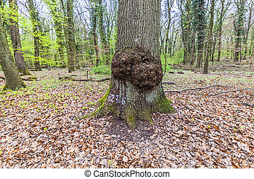 big tree stump in the forest