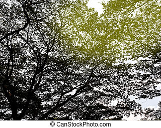 Big tree with light isolated on white background