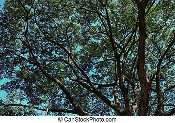 Big tree with sky