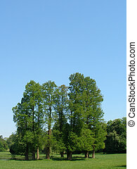 Big trees & blue sky - Chantilly castle park - Castle of...