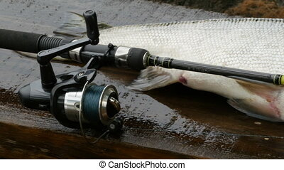 Big trophy fish and fishing rod close to