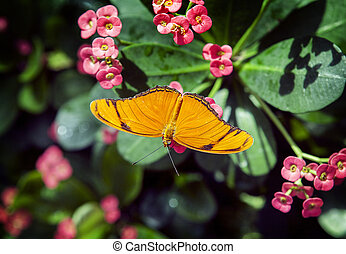 tropical butterfly sitting on green grass