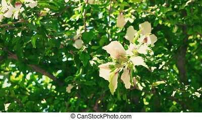 Big tropical Flowers On Bush
