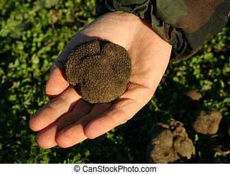 big truffle in hand