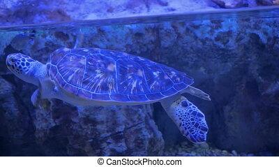 Big turtle swimming underwater near fish