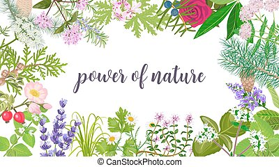 Big vector set of beautiful flowers and plants. Ornament with text power of nature. Rose, Geranium, lavender, mint, melissa, Chamomile, pine, juniper, rosehip etc. For wallpaper, cards, invitations