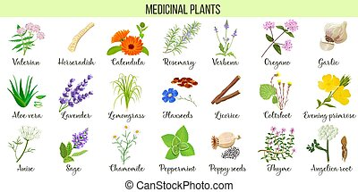 Big vector set of medicinal plants. Valerian, Aloe vera, ...