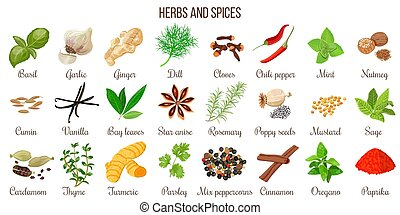 Big vector set of popular culinary herbs and spices. Ginger...