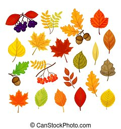 Big vector set with different autumn berries, leaves and acorns