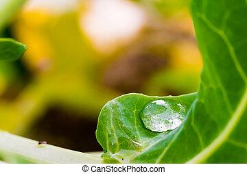 Big water drop on green leaf