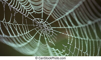 big web in drops of dew shivers on a wind