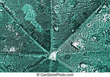 Big wet leaf with dew drops