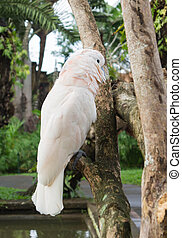 Big white parrot sitting on a tree branch