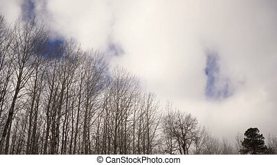 Big White Round Clouds Move over Bare Trees - Blue skies...