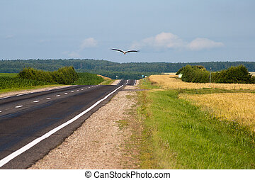 Big white Stork flies over the road