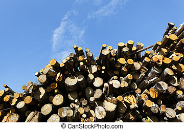 big woodpile and blue sky in spring