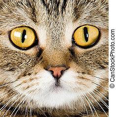 Big yellow eyes. Close-up portrait of cat on a white background