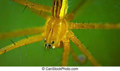 """Big, Yellow Spider Suspended on her Web. FullHD video"""