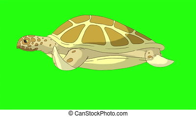 Big yellow turtle swims underwater. Handmade animated looped footage isolated on green screen