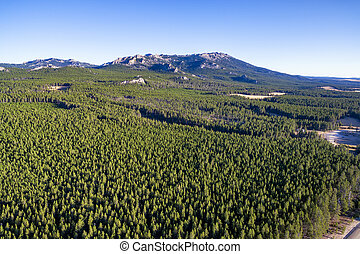 Bighorn Mountains and Forest