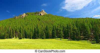 Bighorn National Forest Landscape Wyoming