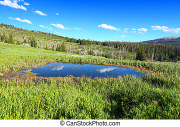 Bighorn National Forest Pond