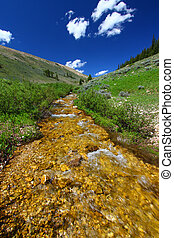 Bighorn National Forest Stream