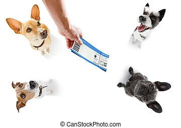 biglietto, cane, vacanza, vacanze