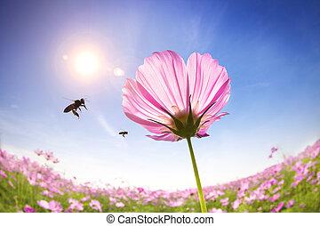 bij, en, roze, madeliefjes, op, de, zonlicht, achtergrond