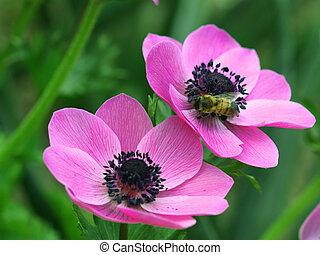 bij, op, bloemen